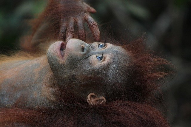 Gefahren des Palmöls – NACHGEFRAGT: Die Grünen Homberg Efze antworten