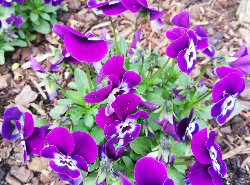 Alles zu seiner Zeit: Blumen im Mai