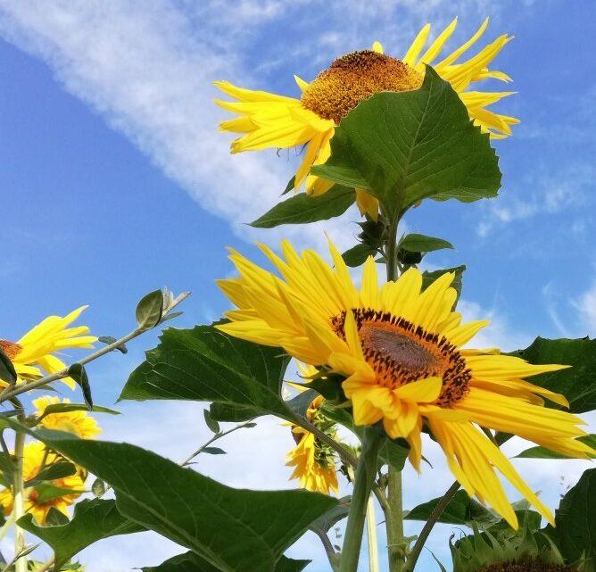 Alles zu seiner Zeit: Blumen im August