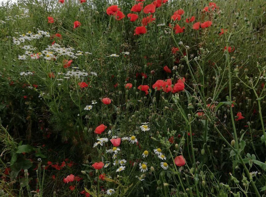 Alles zu seiner Zeit: Blumen im Juli