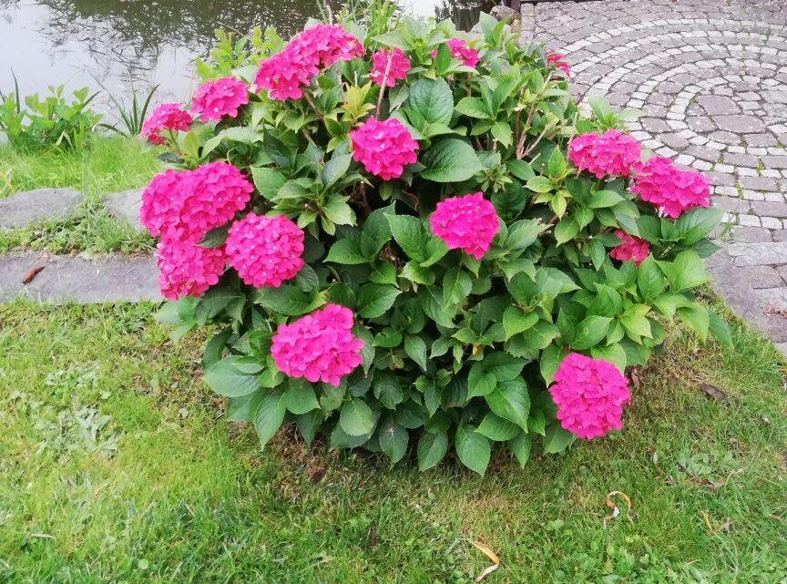 Alles zu seiner Zeit: Blumen im September