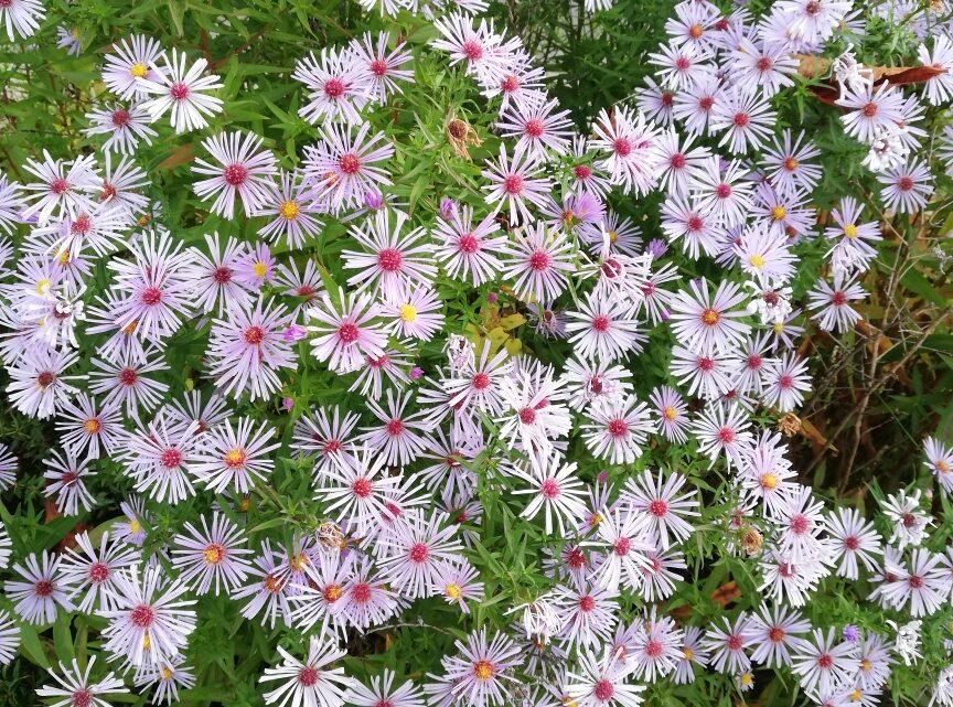 Alles zu seiner Zeit: Blumen im Oktober